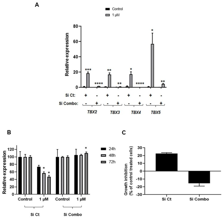 Impact of simultaneous knockdown of all four members of TBX2 subfamily on anti-growth effects of Aza in H1299 cells. ( A ) H1299 cells were transfected with control (4× scrambled) siRNAs and siRNAs targeting all four members of the TBX2 subfamily simultaneously (combination of four target-specific siRNAs) using Lipofectamine RNAiMAX as described in Section 4 . The day following transfection, cells were re-seeded in six cm dishes. The next day cells were incubated overnight with reduced serum (1% FBS) medium prior to treatment with either DMSO control or 1 µM Aza for 72 h. Total RNA was extracted and RNA expression levels of TBX2, TBX3, TBX4 and TBX5 were analyzed using the 2 −∆∆ C t calculation method by normalization to GAPDH . H1299 cells were transfected in the same manner described above, except they were re-seeded the following day in 96-well plates for MTT assays ( B ) and trypan blue exclusion analysis ( C ). Cell numbers (% of control DMSO treatment) were determined using MTT assays ( B ) and percentages of cell growth inhibition in Aza-treated cells were obtained using the trypan blue exclusion method ( C ). Growth inhibition following the trypan blue exclusion analysis was calculated using the following formula: (100 − (treated/non-treated) × 100) and is depicted for the Aza-treated cells. Data depicted represent mean ± SD for MTT assays and mean ± SEM of triplicates for trypan blue exclusion analysis (* p