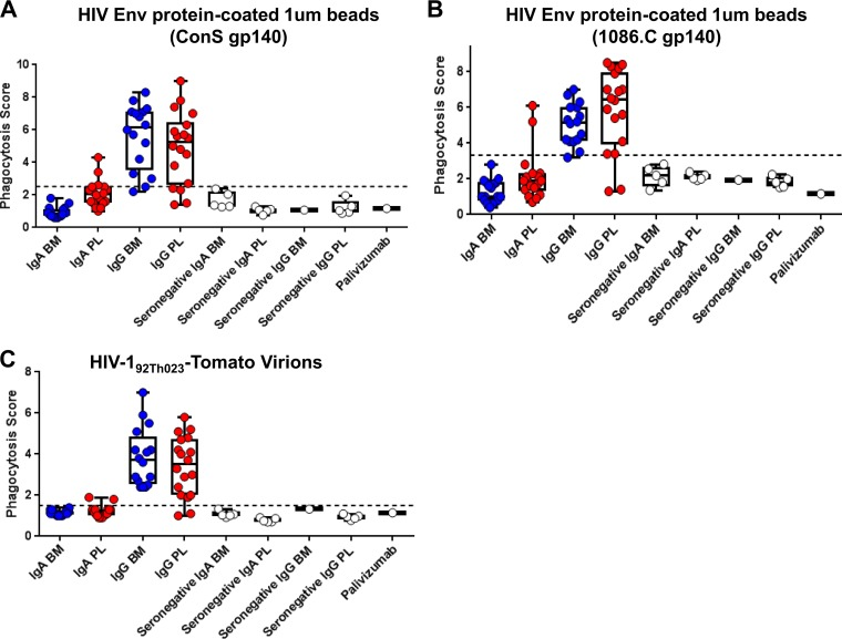 Breast milk and plasma IgGs, but not IgAs, mediate phagocytosis of HIV-1 virions and Env-coated beads. To determine the phagocytosis function in antibody fractions of breast milk (BM) and plasma (PL), we tested IgA and IgG from milk and plasma of 16 HIV + women for phagocytosis of beads coated with HIV-1 Env ConS gp140 (A), beads coated with HIV-1 Env 1086.C gp140 (B), and fully infectious fluorescent HIV-1 virions (HIV-1 92Th023 -Tomato) (C). Antibodies from an additional five HIV-negative women were also tested as negative controls, as well as the anti-respiratory syncytial virus antibody palivizumab. The black dotted line indicates the positivity cutoff, determined using the mean +3 standard deviations of values of the negative controls used in the assay.
