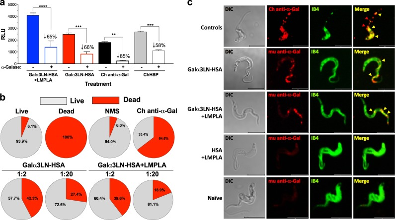 Anti-Galα3LN-HSA Abs are α-Gal-specific, have lytic activity, and recognize parasite surface glycotopes. a Chemiluminescent enzyme-linked immunosorbent assay reactivity of sera from α1,3GalT-KO mice vaccinated with Galα3LN-HSA+/−LMPLA before and after green coffee bean α-galactosidase (α-Galase) treatment of the immobilized Galα3LN-HSA antigen. Purified human Chagas (Ch) anti-α-Gal immunoglobulin G (IgG) antibodies (Abs) and human serum pool from chronic Ch disease patients (ChHSP) were used as controls. RLU relative luminescence units. One-way ANOVA with Sidak's multiple comparison test was performed comparing groups before (−) and after (+) α-galactosidase (α-Galase) treatment; p values indicate the significance of group before and after treatment. ** p