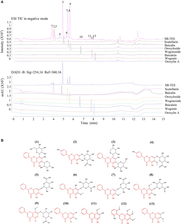 The identification of the chemical components in SB using Agilent 6230 UHPLC-DAD-TOF/MS. (A) TIC (total ion chromatogram) and the corresponding UV chromatogram of SB-TEE and its main components (scutellarin, baicalin, oroxyloside, wogonoside, baicalein, wogonin and oroxylin A). (B) The chemical structures of the identified components in SB.