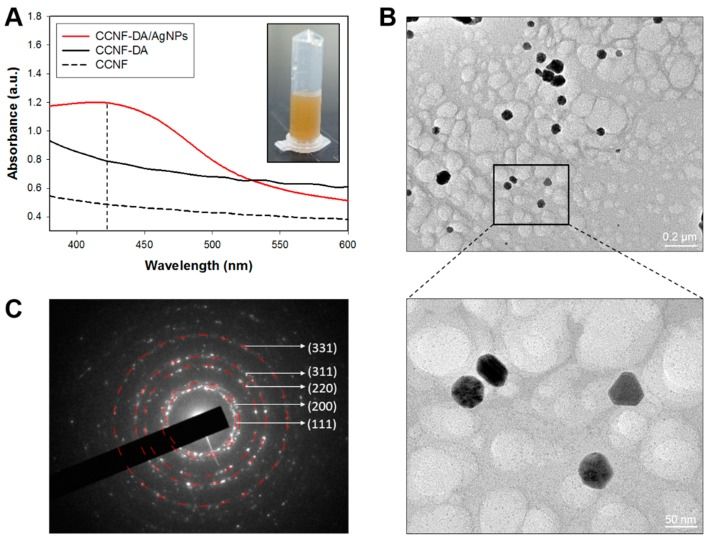 ( A ) UV–Vis spectroscopy of supernatant from CCNF, CCNF-DA and CCNF films. The insect in ( A ) shows the supernatant from the CCNF-DA/AgNPs film; ( B ) high-resolution transmission electron microscopy (HRTEM) image of extracted AgNPs. The inset black box in ( B ) indicates the area where the enlarged HRTEM image (bottom-right panel) was taken; ( C ) selected area electron diffraction (SAED) pattern of silver crystal of CCNF-DA/AgNP.