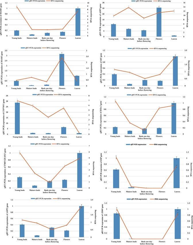 RNA sequencing and qRT-PCR results of the expression genes related with sulforaphane metabolism.