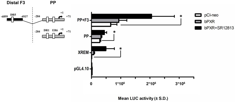bPXR-mediated transactivation of the proximal promoter and the fragment 3 in CYP3A28 promoter. The transactivation by bPXR of the most responsive fragments PP and F3 was evaluated. C3A cells were transfected with the control reporter pCMVβ (150 ng/well), each reporter plasmids or CYP3A4-XREM-luc (XREM, 50 ng/well) and either bPXR expression plasmids or pCI-neo empty vector (25 ng/well). After transfection, cells were treated with vehicle (0.1% DMSO) or SR12813 (10 μM) for 24 hours, and reporter activities were measured. Firefly luciferase activities were normalized with β-galactosidase activities. Data are expressed as mean luciferase activities ± SD (n = 3 or 4). Results shown are representative of 3 independent assays. Statistical significance P