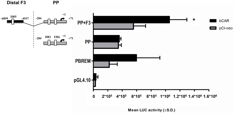 bCAR-mediated transactivation of the proximal promoter and the fragment 3 in CYP3A28 promoter. The transactivation by bCAR of the most responsive fragments PP and F3 was evaluated. C3A cells were transfected with the control reporter pCMVβ (150 ng/well), each reporter plasmids or PBREM-tk-luc (PBREM, 50 ng/well) and either bCAR expression plasmids or pCI-neo empty vector (25 ng/well). After transfection, cells were treated with vehicle (0.1% DMSO) for 24 hours, and reporter activities were measured. Firefly luciferase activities were normalized with β-galactosidase activities. Data are expressed as mean luciferase activities ± SD (n = 3 or 4). Results shown are representative of 3 independent assays. Statistical significance P