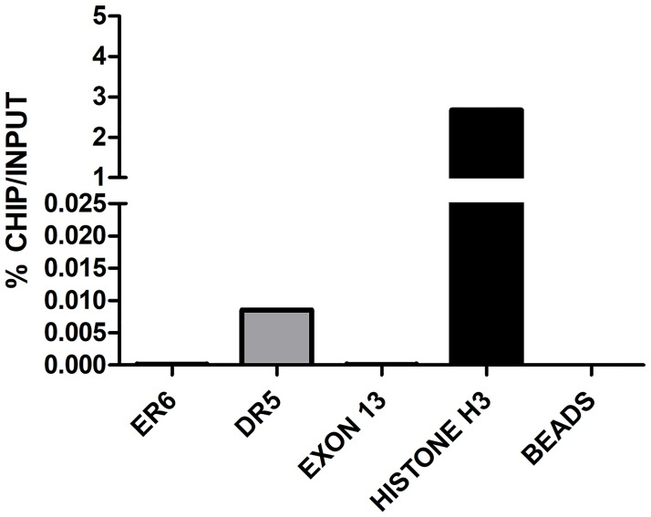ChIP in control BFH12 cells to quantify the binding of CAR to ER6 and DR5 binding sites. BFH12 cells were exposed to 0.1% DMSO for 6 hours. Chromatin was then isolated, subjected to ChIP using anti-human CAR antibody and quantified by qPCR as described in S1 File . Results for both ER6 and DR5 DNA regions are reported. Data are normalized to input DNA and expressed as % ChIP/input. The experiment was performed four times independently, and similar results were obtained. The data shown derived from a representative experiment. Chromatin samples from control cells immunoprecipitated with or without Histone H3 antibody are shown as Histone H3 and beads, respectively. A further negative control (exon 13), representing a CYP3A28 DNA region without NR binding sites, is reported in the graph. In all experiments, negative and positive controls behaved as expected.