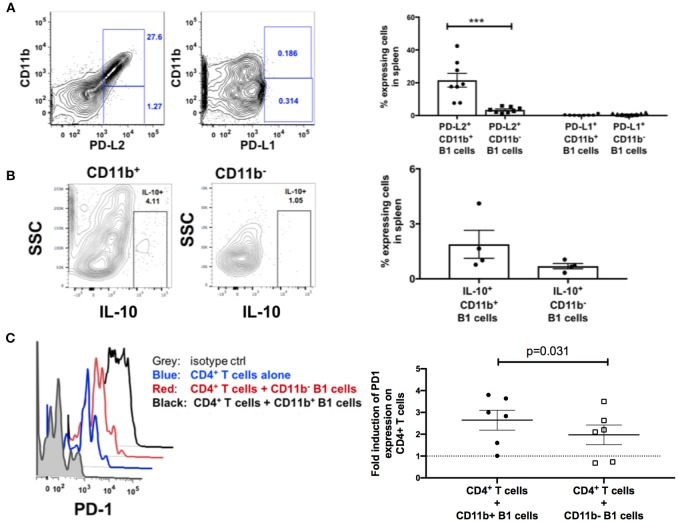B1 cells possess T-cell exhaustion-inducing potential. (A) Representative example of flow cytometric analysis of PD-L1 and PD-L2 expression on splenic B1 cells by gating on CD3 − CD19 + CD43 + CD27 + CD11b + or CD3 − CD19 + CD43 + CD27 + CD11b − cells. Shown to the right are mean frequencies ± SEM. Data are from 8 macaques. (B) Representative example of flow cytometric analysis of IL-10 + splenic B1 cells by gating on CD3 − CD19 + CD43 + CD27 + CD11b + or CD3 − CD19 + CD43 + CD27 + CD11b − cells. Shown to the right are mean frequencies ± SEM. Data are from 4 macaques. Splenocytes were acquired during the chronic phase of SIV infection. For statistical analysis nonparametric unpaired Mann–Whitney tests were performed. *** p