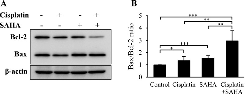 Bcl-2 and Bax expression in VAT-39 cells. ( A ) Western blot analysis of Bcl-2 and Bax in 5 μM cisplatin- and 2 μM SAHA-treated VAT-39 cells. Isolated proteins (10 μg) were subjected to SDS-PAGE. Rabbit anti-Bcl-2 and mouse anti-Bax antibodies were incubated with the same membrane. ( B ) Protein bands were analyzed with densitometry, and the result is shown as the Bax/Bcl-2 ratio. * P