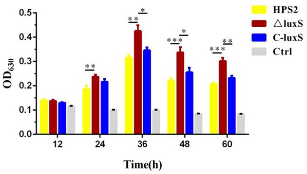 Biofilm formation ability of HPS2, ΔluxS, and C-luxS strains at different time points. Biofilm formation was determined by measuring the OD 630 value of dissolved crystal violet. The biofilm formation ability was monitored by measuring OD 630 value at 12, 24, 36, 48, and 60 h post incubation. Each strain was tested in 6 wells in a 96-well <t>microtiter</t> plate. Y-axis meant the relative biofilm value normalized as the OD 600 value of the bacterial cultures. All above assays were performed in triplicate for three times. Bars represent the mean ± standard deviation of three independent experiments. Statistical analyses were performed using the two-way ANOVA. * p