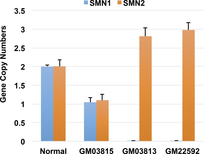 Examination of gene copy numbers in fibroblast cells of WT (normal), SMA patients (GM03813 and GM22592), and patient father (GM03815). Notes: (1) The SMN gene copy numbers were measured using real-time TaqMan PCR method as described before ( Gomez-Curet et al, 2007 ). Detailed information about the sequences of primers, probers, and blockers can be found in the article ( Gomez-Curet et al, 2007 ). (2) For SMN1 assay, the PCR reactions (total 15 μl) contained 25 ng of genomic DNA, TaqMan Gene Expression Master Mix (Applied Biosystems), 250 nM of SMN probe, and 300 nM of SMN1 primers. For SMN2 assay, the reactions consisted of the same DNA and master mix, the SMN probe (650 nM), SMN2 primer (450 nM), and SMN1 blocker (650 nM). CFTR (as Control) reactions contained 25 ng of genomic DNA, 1× TaqMan Gene Expression Master Mix, 450 nM CFTR primers, and 250 nM CFTR probe. (3) The qRT-PCR for SMN1 , SMN2 , and CFTR were performed using ABI QuantStudio 6 Flex Real-Time PCR system (Applied Biosystems). The qRT-PCR conditions were 50°C for 2 min, 95°C for 10 min, followed by 45 cycles of 95°C for 15 s, and 60°C for 1 min. The value was calculated using the ΔΔCT method. Data were presented as mean ± SD, n = 3–6. The copy numbers for SMN1 and SMN2 are coinciding with what were reported on the Coriell Institute Biorepositories Web site.
