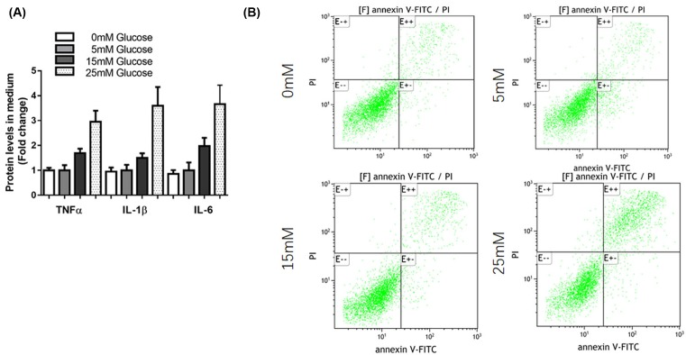 High glucose induced pro-inflammatory cytokines and apoptosis in mesangial cells ( A ) SV40 MES 13 cells were treated with 5, 15, and 50 mM glucose for 48 h, the levels of inflammatory cytokines (TNF-α, IL-1β, and IL-6) were determined by ELISA. ( B ) SV40 MES 13 cells were treated with 0, 5, 15, and 50 mM glucose for 48 h, cells were harvested and cell apoptosis ratio was analyzed by flow cytometry.