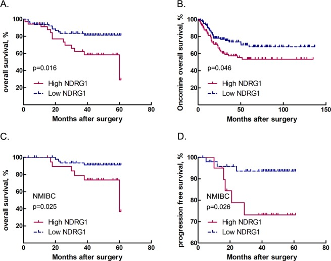 Correlations between NDRG1 expression and bladder cancer patient outcomes. ( A ) Overall survival of all patients with bladder cancer stratified by NDRG1 protein expression level; Kaplan-Meier method, log-rank test, p = 0.016. ( B ) Overall survival of bladder cancer patients from the Oncomine dataset stratified by NDRG1 mRNA expression level; Kaplan-Meier method, log-rank test, p = 0.046. ( C ) Overall survival (Kaplan-Meier curve, log-rank test, p = 0.025) and ( D ) progression-free survival of non-muscle-invasive bladder cancer (NMIBC) patients (Kaplan-Meier curve, log-rank test, p = 0.026).