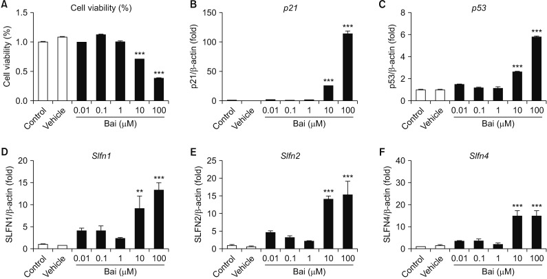Gene expression associated with cell cycle of bleomycin (BLM) treatment in MLE-12 cells. The MLE-12 cells were treated with BLM (1–10 µg/mL) for 24 hours. Measured the p21 (A), p53 (B), and proliferating cell nuclear antigen ( Pcna ) (C) at the mRNA levels, which were associated with cell cycle. BLM exposed MLE-12 cells were measured expression of Slfn1 (D), Slfn2 (E), and Slfn4 (F) by quantitative real-time reverse transcription-polymerase chain reaction analysis.