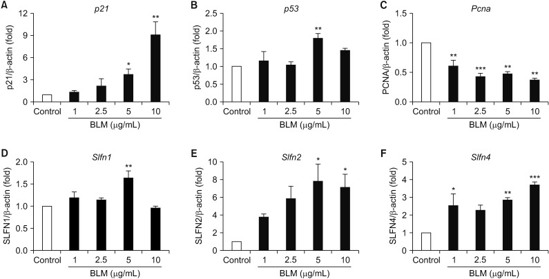 The evaluation of baicalein (Bai) affected MLE-12 cells. The MLE-12 cells were treated with Bai (0.01–100 µM) for 24 hours. (A) The cell viability was measured using MTT assay. Measured the p21 (B) and p53 (C) at the mRNA levels, which were associated with cell cycle. Bai exposed MLE-12 cells were measured expression of Slfn1 (D), Slfn2 (E), and Slfn4 (F) by quantitative real-time reverse transcription-polymerase chain reaction analysis. ** p