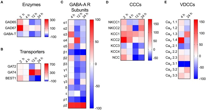 Modulated transcriptional expression of GABAergic and VDCC signaling components in  Toxoplasma -challenged primary microglia. The relative expression (2 −Δ Ct ) for each target gene in  Toxoplasma  (PTG)-challenged primary microglia was normalized to that of in unchallenged microglia and the differences are represented as percentage increase (red color intensity scale) or decrease (blue scale) in the heat map. For both conditions, unchallenged and  Toxoplasma -challenged, data is represented as mean of 2–4 independent experiments at indicated time points. The modulation of mRNA expression is shown for  (A)  GABA synthesis and degrading enzymes,  (B)  GABA transporters,  (C)  GABA-A R subunits,  (D)  CCCs, and  (E)  VDCCs.