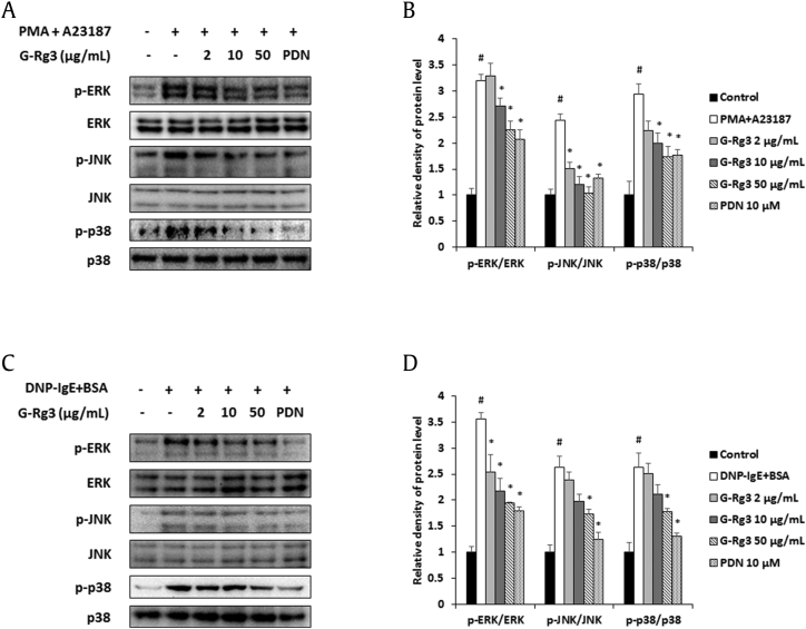 Ginsenoside Rg3 (G-Rg3) inhibited phosphorylation of MAPKs in activated mast cells. Phosphorylation of ERK, JNK, and p38 was detected by Western blotting. (A and B) HMC-1 cells (1 × 10 6 cells/well) were incubated with G-Rg3 and PDN (10 μM) for 30 min and stimulated with PMA (50 nM) + A23187 (1 μM) for 30 min. (C and D) DNP-IgE (100 ng/mL)–sensitized RBL-2H3 cells (1 × 10 6 cells/well) were incubated with G-Rg3 and PDN (10 μM) for 30 min and stimulated with DNP-BSA (10 μg/mL) for 30 min. Relative levels of MAPKs (B and D) were calculated using the Image J program (NIH, Bethesda, MD, USA). Results are the mean ± SD. # p