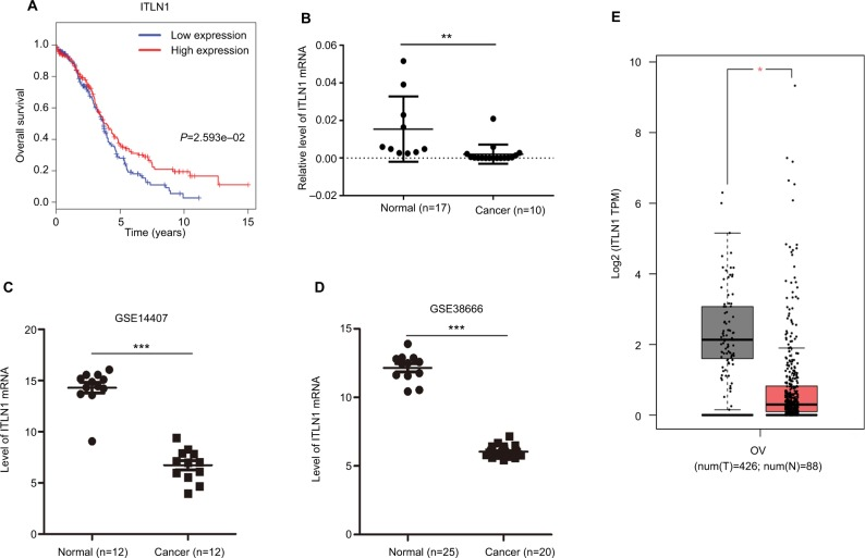 Validation of hub genes. Notes: ( A ) Survival analysis indicated that ITLN1 was a positive prognosis factor in epithelial ovarian cancer, while patients with a higher expression of ITLN1 had significantly longer overall survival compared to those with higher expression ( P =2.593e–02). ( B ) ITLN1 validation using <t>qRT-PCR</t> analysis. ( C, D ) Validation of ITLN1 expression from the GEO databases. Two datasets showed lower expression of ITLN1 in epithelial ovarian cancer tissues compared with normal ovarian tissues ( P