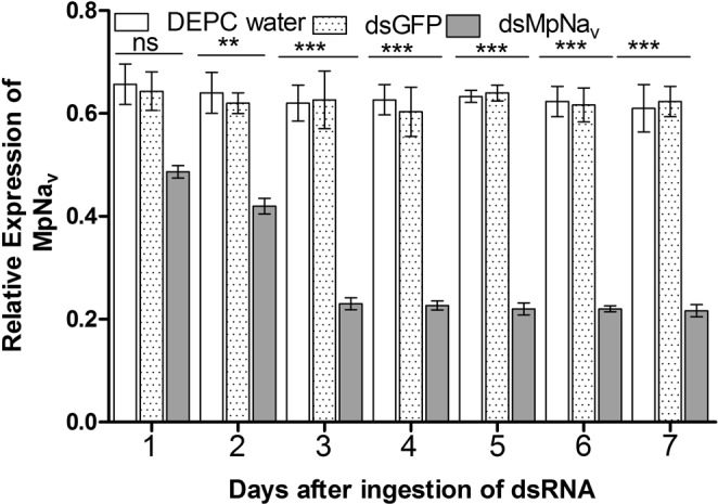 Dietary delivery of MpNa v dsRNA alters MpNa v expression in M . persicae . Relative abundances of MpNa v H1 gene transcripts, as determined by qRT-PCR of cDNA made from total RNA isolated from whole body 1 to 7 days after the indicated dietary treatments of M . persicae . Data represent the mean ± SEM of three independent experiments. MpNa v mRNA was normalized with Actin as an endogenous control. Treatment was compared with controls using ANOVA (Tukey Kramer multiple comparison, p