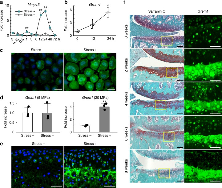 Induction of gremlin-1 by excessive mechanical loading. a Time-course of Mmp13 mRNA levels in mouse primary chondrocytes after tensile stress loading (stress+), or without loading (stress −). Cells were cultured up to 72 h after uniaxial cyclic tensile strain (10%, 0.5 Hz, 30 min). # P
