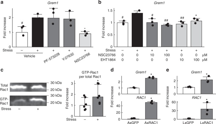 Gremlin-1 induction by mechanical stress loading occurs through Rac1 activation. a Gremlin-1 mRNA levels in mouse primary chondrocytes treated with 10 µM inhibitors of FAK (PF-573228), ROCK (Y-27632), or RAC1 (NSC23766) 24 h after cyclic tensile strain loading. n = 3 biologically independent samples. * P
