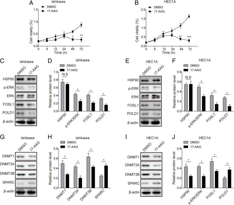 HSP90 inhibitor 17-AAG exhibits similar effects as knockdown of PGK1. a - b . MTT assay was used to evaluate the effects of HSP90 inhibitor 17-AAG on cell viability in endometrial cell lines Ishikawa ( a ) and HEC1A ( b ). DMSO was used as negative control. c . Western blot was used to detect the expression of DNA repair-related proteins c-JUN, FOSL1, and POLD1 in the presence of HSP90 inhibitor 17-AAG in Ishikawa cancer cell line. β-actin was used as a loading control. d . Semi-quantitative analysis of protein level in C. e . Western blot was used to detect the expression of DNA repair-related proteins c-JUN, FOSL1, and POLD1 in the presence of HSP90 inhibitor 17-AAG in HEC1A cancer cell line. β-actin was used as a loading control. f . Semi-quantitative analysis of protein level in E. g . Western blot was performed to examine the effect of HSP90 inhibitor 17-AAG on the expression of DNA methyltransferases (DNMT1, DNMT3A, and DNMT3B) and SPARC in Ishikawa cancer cell line. β-actin was used as a loading control. h . Semi-quantitative analysis of protein level in G. i . Western blot was performed to examine the effect of HSP90 inhibitor 17-AAG on the expression of DNA methyltransferases (DNMT1, DNMT3A, and DNMT3B) and SPARC in HEC1A cancer cell line. β-actin was used as a loading control. j . Semi-quantitative analysis of protein level in I. Data were shown as mean ± SD based on three independent experiments. *, P