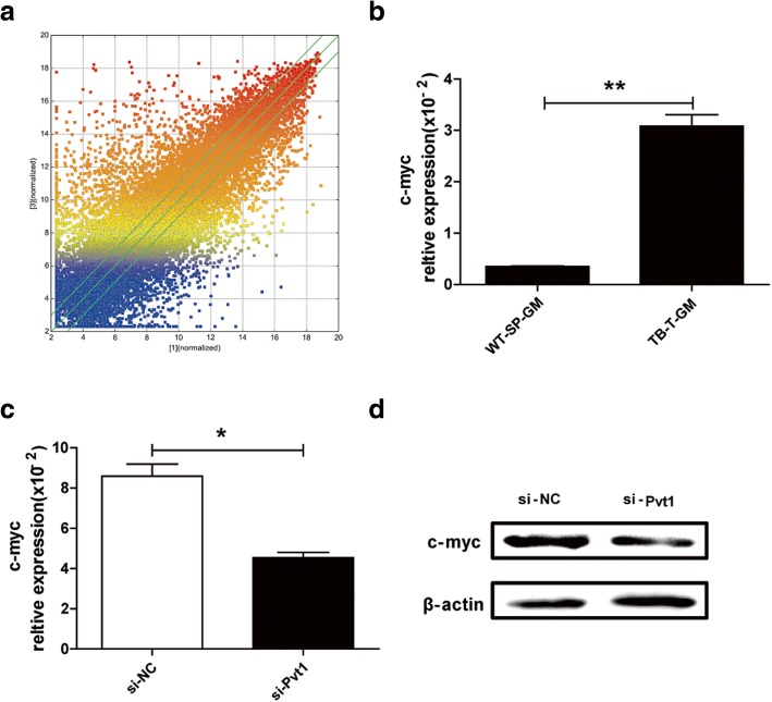 c-myc is a potential downstream target of Pvt1 in G-MDSCs. a Scatter plot for protein-coding RNAs. b qRT-PCR was used to detect the mRNA level of c-myc in G-MDSCs sorted from spleen of WT mice and tumor tissues of TB mice. c , d After transfection with si-Pvt1, the mRNA and protein levels of c-myc in G-MDSCs isolated from tumor tissues were measured via qRT-PCR and western blot analyses. ** p