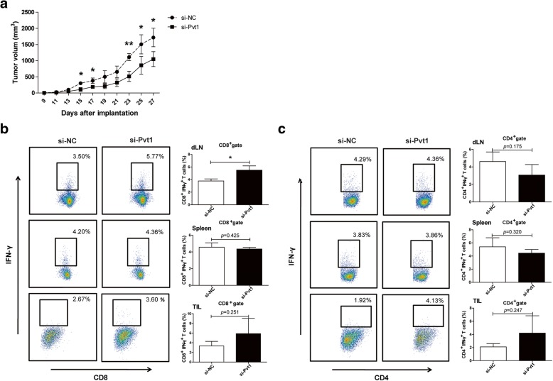 Pvt1 knockdown reduces the ability of G-MDSCs to accelerate tumor progression and inhibit antitumor immune responses. Two groups of mice were given a s.c. injection of a mixture of LLCs and G-MDSCs transfected with si-Pvt1 (si-Pvt1 group) or si-NC (si-NC group). a Tumor volume was measured at the indicated time. b , c The proportions of CD8 + IFN-γ + CTLs and CD4 + IFN-γ + Th1 cells from draining lymph nodes, spleens and tumor tissues were analyzed via flow cytometry. ** p