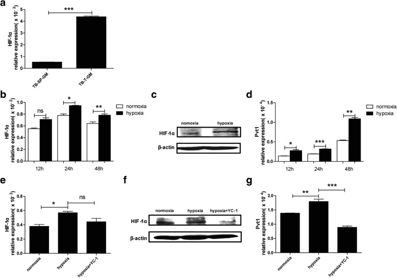 HIF-1α upregulates Pvt1 expression in G-MDSCs under hypoxic stress. a The mRNA level of HIF-1α in G-MDSCs sorted from spleens and tumor tissues of TB mice was detected using qRT-PCR. G-MDSCs isolated from spleens of TB mice were cultured in an incubator at 37 °C (20% O 2 , 5% CO 2 ) (normoxic conditions) or in a sealed box containing an anaerobic bag to consume oxygen (O 2