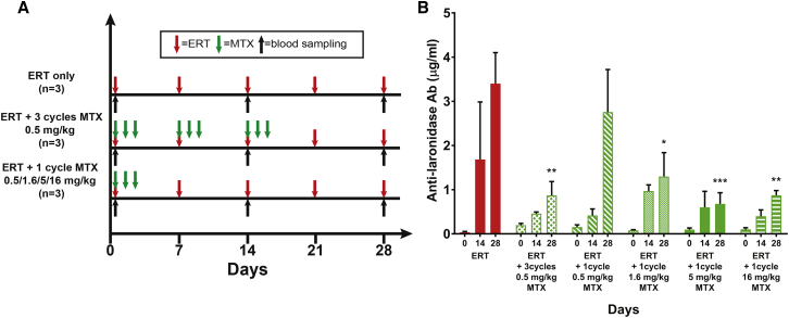 Methotrexate Dose Optimization Delivery Schedule and Antibody Levels in MPS I Mice (A) All MPS I mice (n = 3 for each group) received 0.58 mg/kg laronidase weekly for 4 weeks. Some mice were given three cycles of 0.5 mg/kg methotrexate 0, 24, and 48 h after each laronidase treatment, and other mice received one cycle of methotrexate (doses ranged from 0.5 to 16 mg/kg) 0, 24, and 48 h after the first laronidase treatment. Blood samples were taken from all the mice on days 0, 13, and 28 for antibody analysis. (B) Serum anti-laronidase IgG antibodies were evaluated by ELISA. Data are shown as mean ± SEM, two-way ANOVA; *p