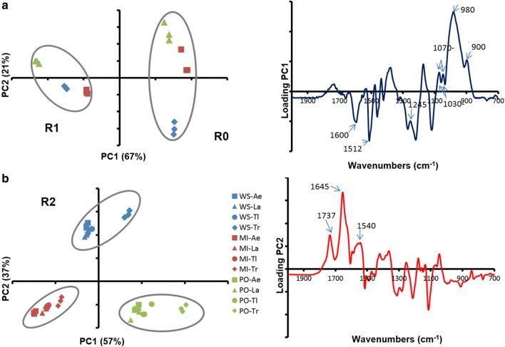 PCA of the biomass samples FT-IR spectra. A: R0 and R1, B: R2. Wheat straw (WS), blue; miscanthus (MI), red; poplar (PO), green; Ae, A. elegans ; La, L. arvalis ; Tl, T. ljubarskyi ; Tr, T. reesei . Ellipses were drawn manually to highlight clusters