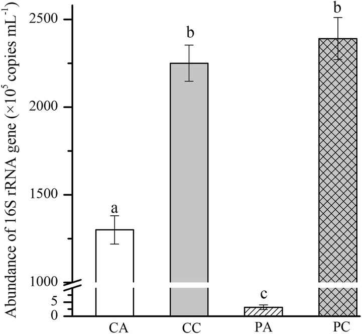 The absolute bacterial abundance based on 16S rRNA copies in unsterilized piggery wastewater. CA means sparging air, CC means sparging simulated flue gas, PA means culturing C. pyrenoidosa with sparging air, and PC means culturing C. pyrenoidosa with sparging simulated flue gas. Data are presented as the mean ± standard deviation of the mean. The different letters indicate that there was a significant difference with P