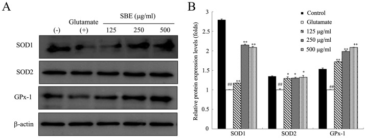 Effects of Scrophularia buergeriana extract (SBE) on antioxidant protein expression levels in SH-SY5Y cells. (A) The expression levels of superoxide dismutase (SOD)1, SOD2, and glutathione peroxidase-1 (GPx-1) were measured by western blot analysis. (B) The density of the protein bands was quantified and calculated using ImageJ software. Protein expression levels were normalized to those of β-actin. The data are expressed as the means ± SEM of independent experiments (n=3). * P