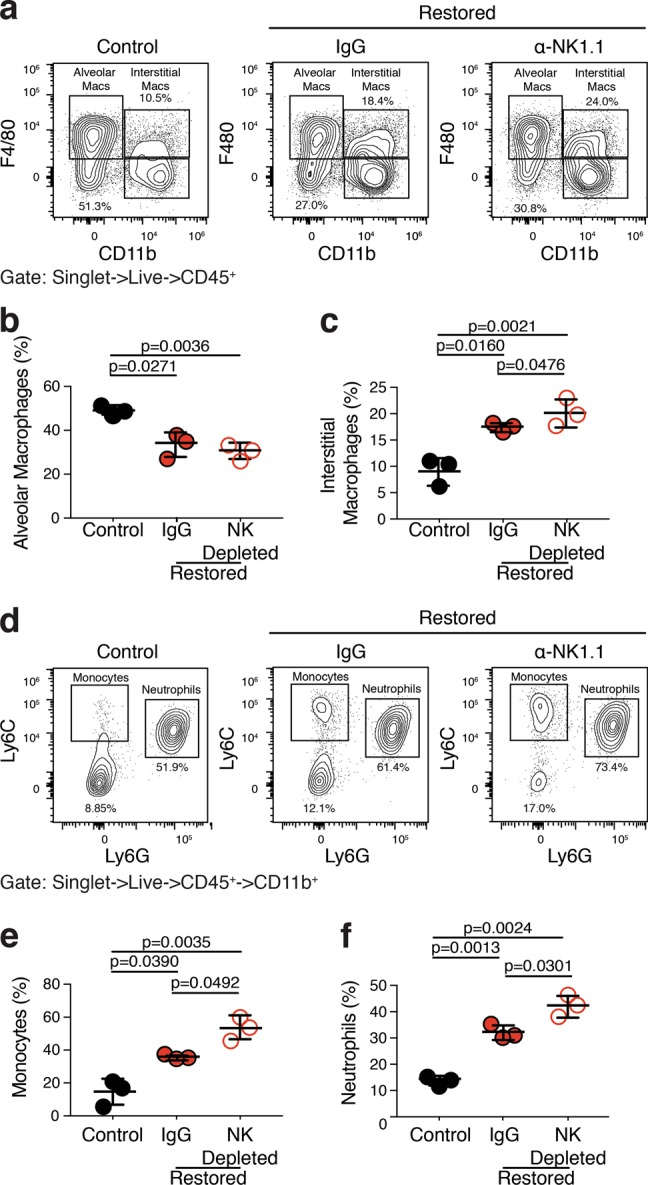 NK cells limit a p53-mediated immunoinflammatory reaction that is associated with lung adenocarcinoma regression. Cell suspensions from the lungs of KPr tumor-bearing Rag1 -/- mice treated with corn oil (Control), tamoxifen (Restored), and tamoxifen, and anti-NK1.1 (Restored NK Depleted) were subjected to multiparameter flow cytometry. a Cells gated to include live singlets that are CD45 pos. are plotted on CD11b X F4/80. b Alveolar macrophages (CD11b neg. ; F4/80 pos. ) are quantified from a . c Interstitial macrophages (CD11b pos. ;F4/80 pos. ) are quantified from a . d CD11b pos. cells from a are plotted on Ly6G X Ly6C. e Monocytes (CD11b pos. ; Ly6C pos. ; Ly6G neg. ) are quantified from d . f Neutrophils (CD11b pos. ; Ly6C pos. ; Ly6G pos. ) are quantified from d . Analysis of significance between control and restored treatment groups was performed by t -test