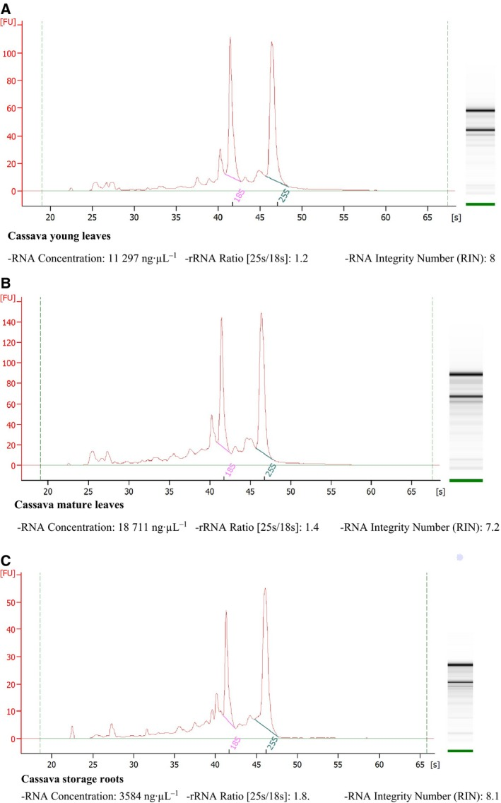 Electropherograms of total RNA from cassava obtained using our method showing 18S and 25S rRNA regions with RNA concentrations and RIN values; (A) to (C) correspond with RNA from leaves and storage roots, and (A) and (B) correspond with RNA from different stages of plant development (young and mature leaves). RNA were visualized in denaturing agarose gels stained with SYBR safe. RNA were analyzed using Agilent <t>RNA</t> 6000 <t>Nano</t> Assays in a 2100 Bioanalyzer (Agilent Technologies) and were then used for RNA sequencing.