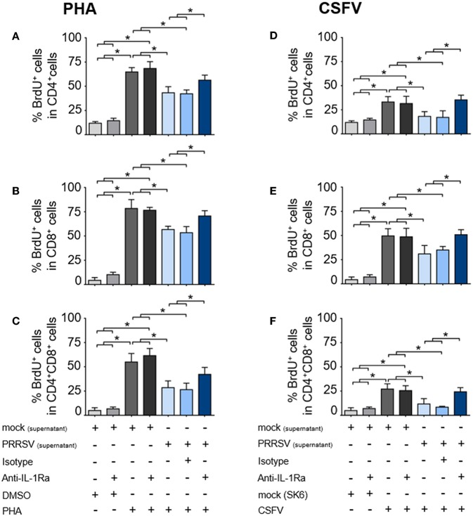 PRRSV-induced IL-1Ra inhibited lymphocyte proliferation. PRRSV-induced IL-1Ra inhibited PHA-induced proliferation of the (A) CD4 + , (B) <t>CD8</t> + , and (C) CD4 + CD8 + subpopulations. PRRSV-induced IL-1Ra inhibited CSFV-specific proliferations of the (D) CD4 + , (E) CD8 + , and (F) CD4 + CD8 + subpopulations. The supernatants obtained from type 2 PRRSV or mock (MARC-145 cell lysate) were pretreated with anti-IL-1Ra Ab for 2 h prior to addition into the culture. PBL or PBMC were culture with PHA, CSFV or controls for 96 h, in the presence of the pretreated supernatants. ± indicates presence/absence of indicated treatment within the culture. Data represents mean ± SD from 5 pigs. Statistical significance was analyzed using ANOVA followed by Tukey's test. * indicates significant difference at p