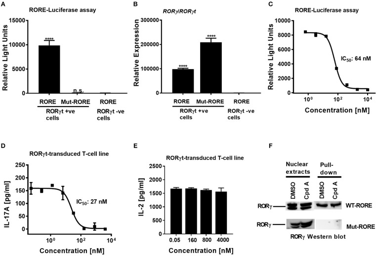 Cpd A potently inhibits transcriptional activity of human RORγt in the full-length context in T-cells. (A) Full-length RORγt drives wild-type RORE-dependent activation of a reporter gene in HUT78 T-cells expressing RORγt, but not in RORγt negative cells. HUT78 cells stably expressing RORγt or empty control vector were transfected with 4 x RORE or mutated RORE-luciferase reporter constructs, followed by stimulation with CD3 antibody/PMA for 48 h and by quantifying luciferase activity. (B) Gene expression level of ROR γ/ ROR γ t in HUT78 T-cells stably expressing RORγt or control vector together with RORE or mutated RORE-reporter genes. (C) Cpd A potently blocked RORE-mediated transcription of the luciferase reporter gene. HUT78 T-cells were stimulated with CD3 antibody plus PMA for 48 h followed by measurement of luciferase activity. (D) HUT78 T-cells stably expressing RORγt were incubated with serial dilutions of Cpd A at the beginning of the stimulation with PMA and anti-CD3 antibody and after 48 h IL-17A or IL-2 (E) concentrations were measured by ELISA. Representative examples of concentration-response curves from three independent experiments are shown. The average IC 50 value obtained for SR2211 in the RORγt-IL-17A inhibition assay was 257 ± 181 nM ( n = 2). (F) RORγt transduced HUT78 T-cells were pre-incubated with Cpd A (10 μM) or DMSO, followed by a 2 h stimulation with anti-CD3 antibody/PMA and nuclear extracts were prepared. Nuclear extracts were subjected to pull-down experiments using mutated (Mut-ROREs) or wild-type (WT ROREs) biotinylated RORE oligonucleotides followed by immobilization of complexes with streptavidin Sepharose beads. Nuclear extracts (left panel) and RORE pull-down complexes (right panel) were subjected to SDS PAGE followed by RORγ Western blot analysis. Results shown are representative of three experiments with triplicate readings with similar results, except for (B) which originates from a single experiment. Error bars show the SD. S