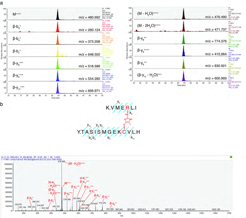 MS2 analysis of CR-MGx crosslinked KEAP1 peptide. a, Targeted Parallel reaction monitoring (PRM) transitions ( n =6). b, Annotated MS2 spectrum from the crosslinked C151-R135 KEAP1 peptide.