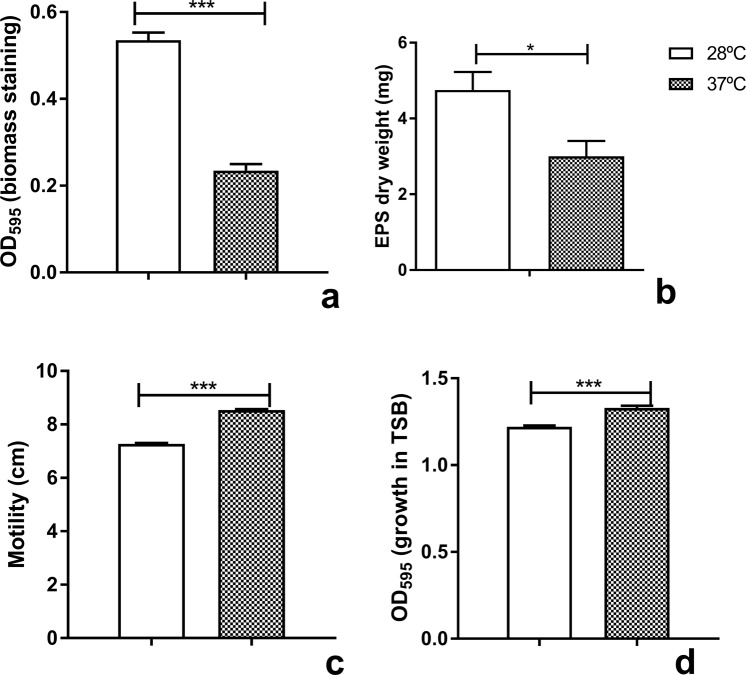 Comparative phenotypic profile of B. seminalis TC3.4.2R3 at 28 °C and at 37 °C. ( a ) Biofilm production; ( b ) EPS production in dry weight; ( c ) swimming motility; and ( d ) growth in TSB medium. For ( a , d ), the error bars represent the standard deviation of three technical replicates and eight biological replicates each; *** p