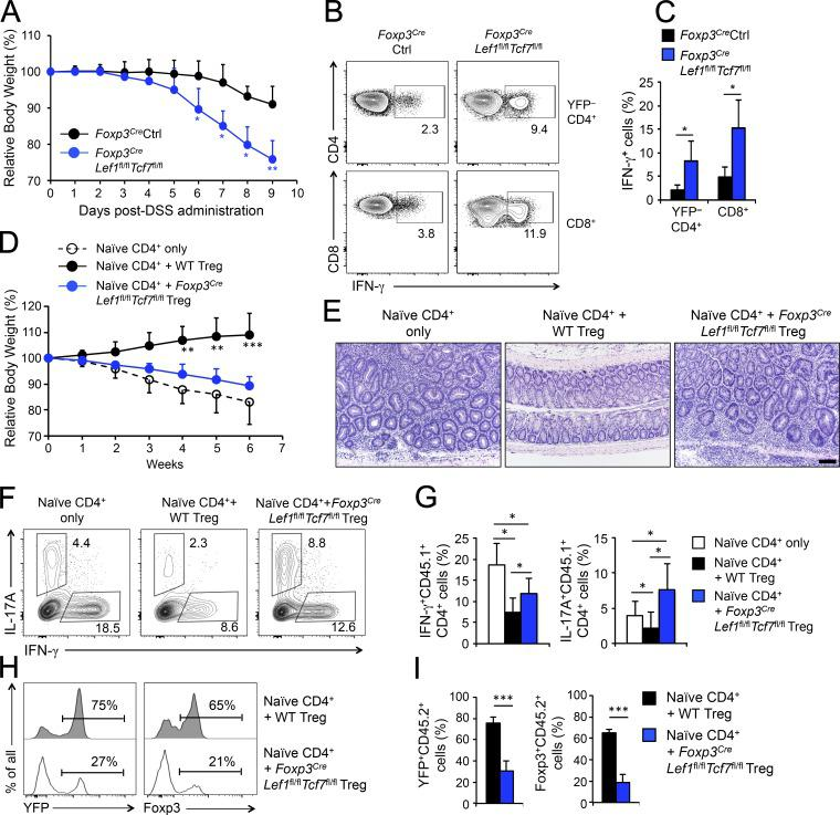 Tcf1/Lef1-deficient T reg cells are functionally impaired. (A–C) DSS-induced acute colitis model. Foxp3 Cre Tcf7 fl/fl Lef1 fl/fl and Foxp3 Cre control mice at 6–12 wk were given DSS at 1.75 g/100 ml (1.75% wt/vol) in drinking water for 8 d and the body weight was tracked daily (A). On day 9, the mesenteric LNs were harvested, and T conv YFP – CD4 + and CD8 + T cells were stimulated with anti-CD3 and anti-CD28 and measured for IFN-γ production. Representative data are in B, and cumulative data are in C. Data in A and C are means ± SD from two independent experiments ( n = 8 for control, and 5 for Foxp3 Cre Tcf7 fl/fl Lef1 fl/fl mice). *, P