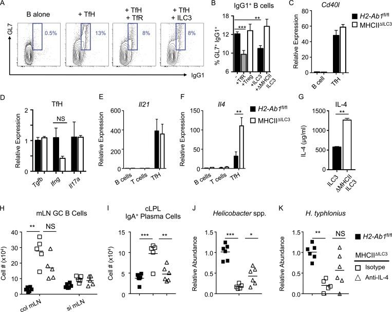 ILC3 suppress TfH-dependent B cell class switching in an MHCII and IL-4–dependent manner. B cells were sort-purified and cultured in vitro alone ( n = 12), with TfH ( n = 12) or with TfH in combination with either (CD3 + CD4 + /CXCR5 + PD1 + )CD25 + GITR + TfR ( n = 11), (CD3 + CD4 + /CXCR5 − PD1 − )CD25 + GITR + T reg cells ( n = 6), wild-type ILC3 ( n = 8), or ILC3 from MHCII ΔILC3 mice ( n = 6). Statistical comparisons performed by one-way ANOVA; data pooled from three independent experiments. (A and B) Representative flow cytometry plots (A) and frequencies (B) of (CD3 − MHCII + /B220 + CD19 + )GL7 + IgG1 + class-switched B cells. (C–F) Expression of Cd40l (C) , Tgfb, Ifng, and Il17a (D) , Il21 (E), and Il4 (F) in sort-purified B cells, T cells, or TfH assessed by qPCR ( n = 3 per group), representative of two independent experiments. Statistical comparisons performed by Student's t test. (G) Concentration of IL-4 protein in supernatants from cocultures containing B cells and TfH cultured with wild-type of MHCII-deficient ILC3, as in A and B. Statistical comparisons performed by Student's t test. (H and I) Cell numbers of mLN (CD3 − MHCII + /B220 + CD19 + )GL7 + Fas + GC B cells (H) and (CD3 − MHCII + )B220 − IgA + plasma cells in the cLPL of anti–IL-4 ( n = 5) or isotype ( n = 5) control–treated MHCII ΔILC3 and H2-Ab1 fl/fl ( n = 6) mice (I). (J and K) Relative abundance of Helicobacter spp. (J) and H. typhlonius (K) in total colonic mucosal bacteria preparations from anti–IL-4 or isotype control–treated MHCII ΔILC3 and H2-Ab1 fl/fl mice. (H–K) Statistical comparisons performed by one-way ANOVA; data representative of two independent experiments. All data shown as mean ± SEM; * P ≤ 0.05, **P ≤ 0.01; ***P ≤ 0.001.