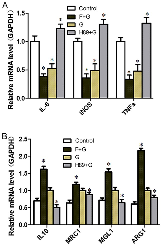 GLP-1/GLP-1 receptor signaling inhibits M1 activation and induces M2 activation via the cyclic adenosine monophosphate/PKA signaling pathway in RAW264.7 cells. (A) RAW264.7 cells were preincubated with the adenylyl cyclase activator Forskolin (10 µM) or the PKA inhibitor H89 (10 µM) for 30 min, followed by treatment without or with GLP-1 (10 nmol/l) for 24 h. *P