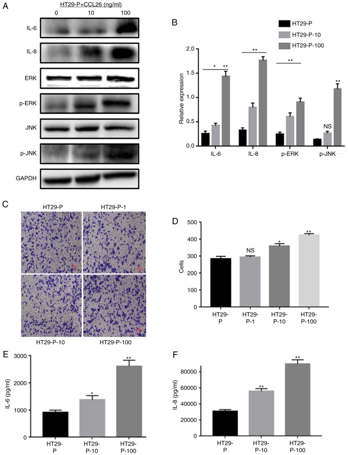 CCL26 increases the expression of IL-6 and IL-8 and the activation of p-JNK and p-ERK in HT29-P cells, resulting in an increase in the invasiveness of CRC cells. (A) Western blot assays and (B) densitometry analysis were performed to measure the expression of IL-6, IL-8, p-JNK, and p-ERK. (C and D) Invasion and migration were analyzed in Matrigel invasion assays. (E) IL-6 and (F) IL-8 were determined by ELISA. *P