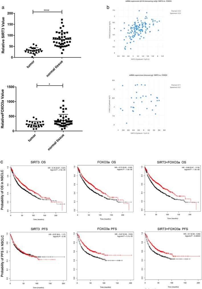 The prognostic and diagnostic values of sirtuin 3 (SIRT3) and Forkhead box O3a (FOXO3a) in lung cancer patients according to databases. ( a ) SIRT3 and FOXO3a levels in small cell lung cancer tumor and normal tissues from the GEO database (65 samples in total; 23 samples were small cell lung cancer tumors, and 42 samples were normal tissues; Student's t ‐test, * P