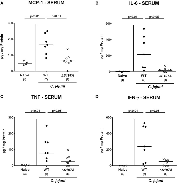Systemic secretion of pro-inflammatory cytokines in C. jejuni infected secondary abiotic IL-10 −/− mice. Secondary abiotic IL-10 −/− mice were perorally infected either with the C. jejuni 11168 HtrA−S197A strain (closed circles) or the isogenic htrA mutant 11168 HtrA−S197A (open circles) by gavage on days 0 and 1. (A) MCP-1, (B) IL-6, (C) TNF, and (D) IFN-γ concentrations were measured in serum samples taken at day 6 postinfection. Naive mice (open diamonds) served as uninfected controls. Medians (black bars), levels of significance ( p -value) determined by the Mann-Whitney U -test and numbers of analyzed animals (in parentheses) are indicated. Data representative for four independent experiments are shown.