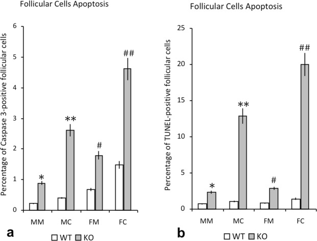 Percentage of apoptosis in thyroid follicular cells of WT and IRS2-KO mice of both sexes. The plots show the comparison between wild-type (WT) and IRS2 deficient animals (KO), regarding the gender and regions of the gland (MM: male marginal; MC: male central; FM: female marginal; FC: female central), and the values are expressed as mean ± SEM. ( a ) Graphic showing the percentage of apoptosis by active caspase-3-positive follicular cells. Significant differences are defined as: * p