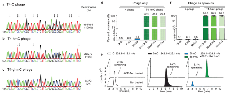 Development and validation of ACE-Seq. ( a-c ) 1 ng of T4 phage genomic DNAs with homogeneous modifications ( a : T4-C; b : T4-hmC; c : T4-ghmC) were heated, snap frozen, and incubated with A3A before amplification of a genomic segment, TA cloning, and Sanger sequencing of individual clones. Illustrative sequencing traces from individual clones are shown below the reference genome. Arrows denote deamination events (C > T transitions). Deamination events are quantified as the number of cytosines that were deaminated across the sum of all clones (93 cytosines per clone; T4-C 5 clones, T4-hmC 3 clones, T4-ghmC 4 clones). ( d,f ) Rates of non-conversion for enzymatically-methylated λ phage gDNA (5mCG, CH) and T4-hmC phage gDNA in ACE-Seq as determined by Illumina sequencing, using inputs of either ( d ) 1 ng of each alone or ( f ) 100 pg each as spike-ins averaged across six mammalian DNA samples (see Supplementary Table 1 ). Mean values listed above each bar, and error bars represent standard deviations. Individual data points are overlaid on the plot. ( e ) Representative LC-MS/MS traces of C, 5mC, 5hmC, and 5ghmC nucleosides after a 1:1 mix of methylated λ gDNA and T4-hmC gDNA was subjected to ACE-Seq treatment (compared to untreated control sample). Percentages denote amount detected after ACE-Seq treatment, averaged across three independent replicates.