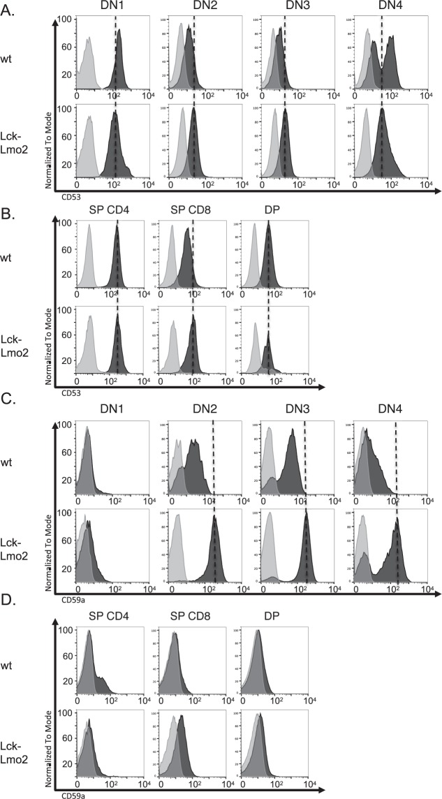 Flow cytometry analysis of CD53 and CD59a expression on mouse Lck-Lmo2 DN thymocytes. Thymus cells were prepared from asymptomatic Lck-Lmo2 mice or equivalent age wild type mice and expression of CD53 (panel A; wild type mice 15 weeks old; Lck-Lmo2 21 weeks old) or CD59a (panel B; wild type 16 weeks old, Lck-Lmo2 19 weeks old) was profiled in the CD4-/CD8- DN subsets (The histogram shows the results for DN cells on stained cells (black) and cells stained with isotype control (light grey). The following fluorescent antibodies were used: CD90-V450, CD4-PE-cy7, CD8-PE, CD44-V500, CD25-APC, CD53-BB515. The x-axis shows fluorescence on a log scale. Panels C,D show the flow cytometry data for the same mice comparing the expression of CD53 (panel C) and CD59a (panel D) in single CD4 positive (SP), single CD8 positive and CD4/CD8 double positive (DP) thymocytes. NB: No suitable antibody is available binding to mouse GPR56.