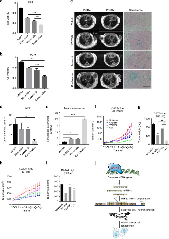 TGFBR1 is a potential target for GATA4-deficient lung cancer. a and b 5000 cells per well seeded in 96-well plates. Cells were treated with SB525334 (2 μM) and/or trametinib (2 μM). CCK8 value were checked 3 days after drug treatment. a For H23 and b for PC9 ( n = 3 per group). c SB525334 (10 mg/kg/day) synergizes with trametinib (10 mg/kg/day) to shrink lung tumor in KRAS G12D /GATA4-/- mice. MRI image of lung of pre-treatment (left panel) and post-treatment (middle panel) of lung cancer bearing mice (PreRx and PostRx); β-Galactosidase staining of lung section of post-treatment mice (right panel). Scale = 100 μm. d Statistics of lung tumor burdens recorded in MRI ( n = 4 per group). e Statistics of senescence in tumor shown ( c ) ( n = 4 per group). f , g , h and i The tumor sizes and weights of PDX tumors treated with TGFBR inhibitor (SB525334, 10 mg/kg/day), Cisplatin (5 mg/kg, once a week), or combination. SH3166: GATA4-low PDX; SH3a: GATA4-high PDX ( n = 6 per group). j Model of how GATA4 regulate TGF-β2 and Wnt-7b signaling and cellular senescence. See text for details. Bars are represented as mean ± SEM of the indicated number ( n ) of repeats. *P