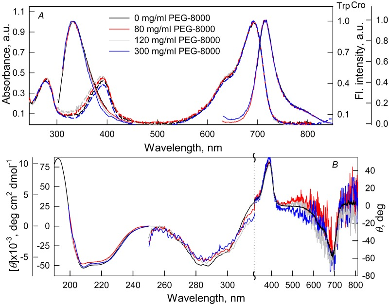 The effect of crowding agent PEG-8000 on the spectral properties of iRFP713 in the holoform. (A) Absorption spectra, tryptophan fluorescence spectra ( λ ex = 295 nm) and the chromophore fluorescence spectra ( λ ex = 690 nm). (B) CD spectra in the far-UV, near-UV and visible region of the spectrum. The color of the curves corresponds to different concentration of PEG-8000: 0 mg/ml (black line), 80 mg/ml (red line), 120 mg/ml (gray line) and 300 mg/ml (blue line). Absorption and fluorescence spectra are drawn by dashed and solid lines, respectively.