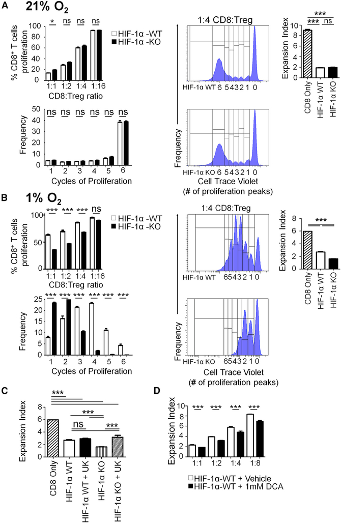 HIF-1α KO Tregs Suppress CD8 + T Cell Proliferation Better than HIF-1α WT Tregs under Hypoxia due to Enhanced Glucose Oxidation (A and B) Sorted and expanded Tregs were plated with proliferation-dye-labeled CD8 + T cells at decreasing ratios to determine their suppressive capability under (A) 21% O 2 and (B) 1% O 2 . After 72 h, CD8 + T cell proliferation was analyzed. An n of 3 wells per ratio was analyzed, representative of three independent experiments. (C) Sorted and expanded Tregs were pre-treated with UK5099 (10 μm) or vehicle control for 24 h before a suppressor assay was run under 1% O 2 . After 72 h, percent proliferation and expansion indexes were determined via flow cytometry. An n of 3 per condition was analyzed, from two independent experiments. (D) Sorted and expanded Tregs were pretreated with 1 mM DCA treatment overnight before suppressor assays were performed under 1% O 2 . Statistics were calculated as percent positive population ± SEM. Unpaired t test analysis was used to calculate significance. *p