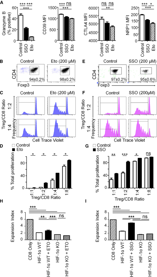 Inhibition of Either Lipid Uptake or Lipid Oxidation Prevents Immunosuppressive Capabilities of Regulatory T Cells (A) Sorted and expanded Tregs were cultured for 72 h in the presence of the fatty acid oxidation inhibitor etomoxir (200 μM) or the fatty acid uptake inhibitor SSO (200 μM), and the expression of various Tregs markers was assessed via flow cytometry. (B and E) Sorted Tregs were cultured for 72 h in the presence of etomoxir (Eto; 200 μM; B) or SSO (200 μM; E), and Foxp3 retention was determined. (C and D) Percent CD8 T cell proliferation with co-culture of Eto pre-treated Tregs shown as a histogram (C) and analyzed as bar graphs with reducing Treg ratios (D) that were enumerated via flow cytometry. (F and G) Percent CD8 T cell proliferation with co-culture of SSO pre-treated Tregs shown as a histogram (F) and analyzed as bar graphs with reducing Treg ratios (G) that were enumerated via flow cytometry. (H and I) Sorted and expanded WT or HIF-1α KO Tregs were pretreated with (H) Eto (200 μM) or (I) SSO (200 μM) for 24 h before a suppressor assay was run under 1% O 2 . After 72 h, expansion indexes were determined via flow cytometry. Flow cytometry statistics were calculated and shown as percent positive or MFI ± SEM; n = 5 per group in (A), and n = 3 per ratio in (B)–(I), representative of 2–3 independent experiments. A one-way ANOVA followed by Tukey's post hoc analysis was used to calculate significance. *p